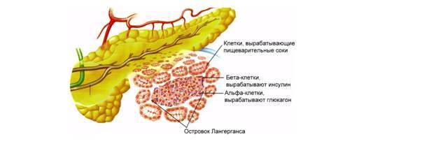 Видеоурок 4 Класс Нервная Система